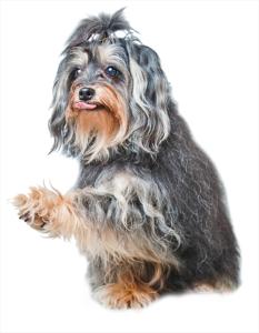 mascot_hunde_as_2015-8826_uden_podie_500px